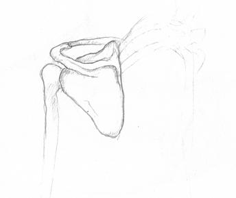 anatom03