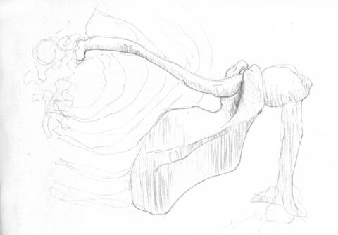 anatom04