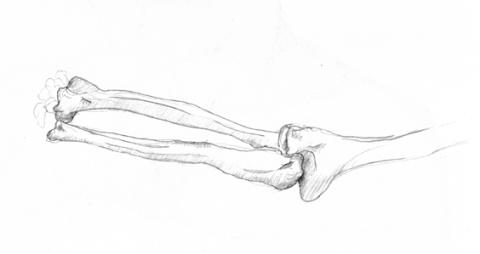 anatom05