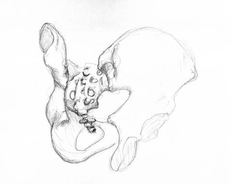 anatom08