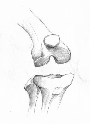 anatom16