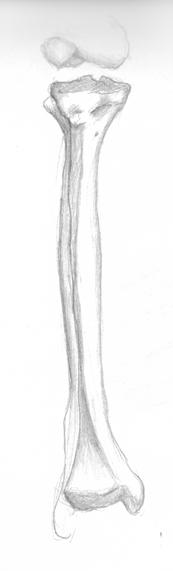 anatom19