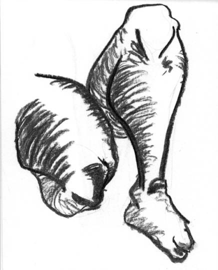 anatom21