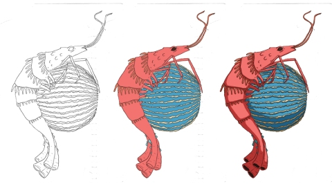 shrimpwip
