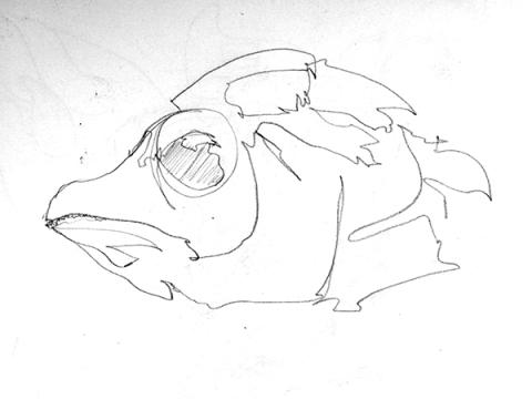 fish015